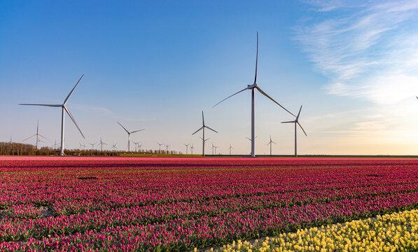 Windmills near tulip field