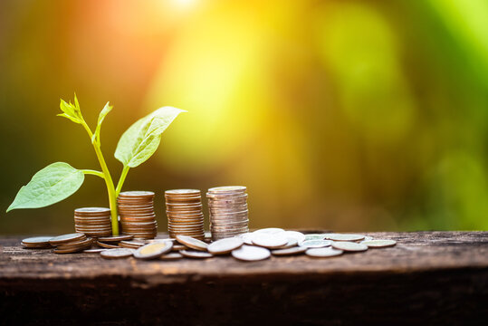 Plant Growing In Savings Coins money growth Saving money