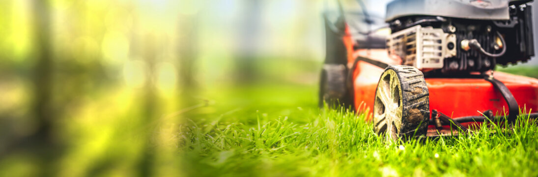 Lawn mower cut grass. Garden work. Electric Rotary lawn mower machine