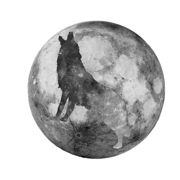 Sombra de lobo en la luna aullando