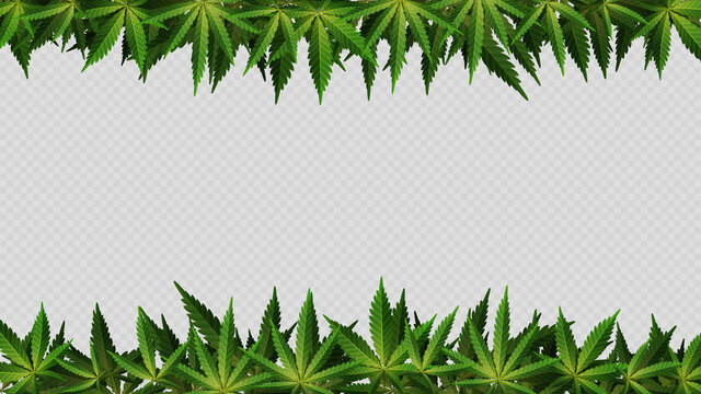 Frame of hemp leaves around horizontal empty space. Layout of a frame made of Cannabis Leafs for your creativity