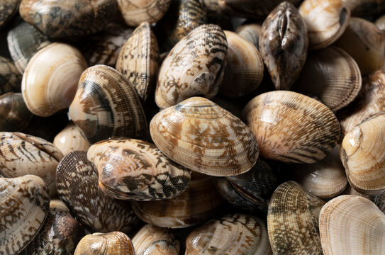 A close-up of asari clams