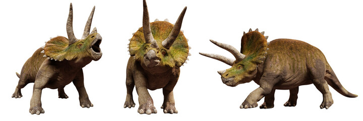 Fototapeta Triceratops horridus, set of dinosaurs isolated on white background