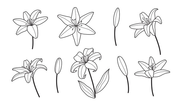 Lily flowers logo line minimal style. Design for greeting card, wedding invitation, tattoo. Feminine icon for nail and hair and spa salon.