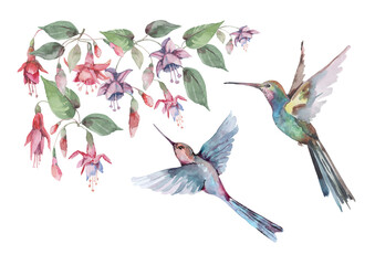 Fototapeta   Birds are small hummingbirds in flight with outstretched wings, pink fuchsia flowers and buds with green leaves. Watercolor for design of cards, invitations, print, background, cover, banner.