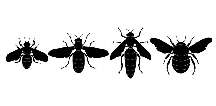 Vector collection of 4 insects silhouettes. Honey bee worker, the drone male bee, the queen bee, the hornet. Minimal graphic illustration.