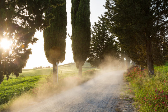 Dust on tree lined road at sunset, Tuscany, Italy