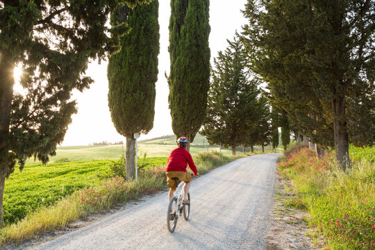 Cyclist on a tree lined dirt road at sunset, Tuscany