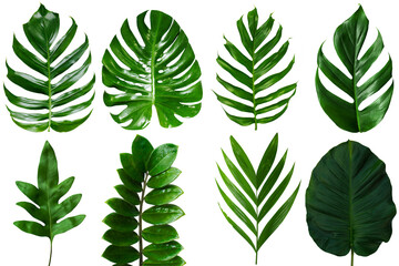 Group Of Top View Tropical Green Leaf On White