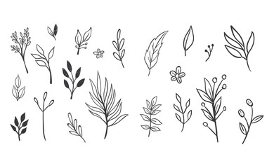 Fototapeta Hand drawn floral elements. Swirls, laurels, arrows, leaves, flowers and branches. Doodle botanical elements.