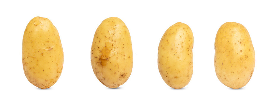 Collection of fresh potato isolated on white background