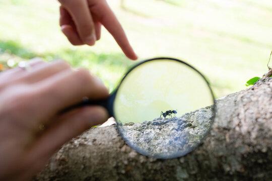 蟻を虫眼鏡で観察する親子