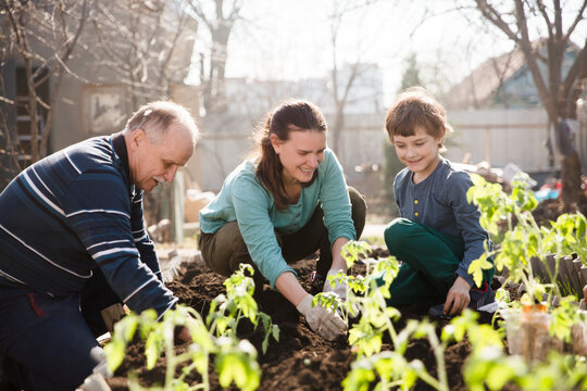 multi generational family work together in the garden and plant seedlings of vegetables in the garden near the house. slow life. enjoy the little things.