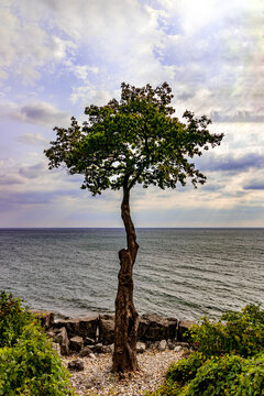 Lone tree standing by the lake - Fall in Central Canada, ON