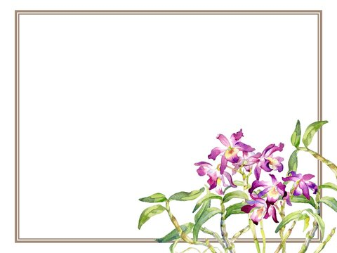 A Vector Frame of Dendrobium Orchid