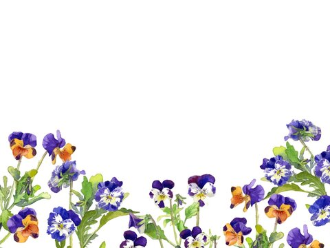 A Background Design Image of Pansies