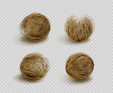 Tumbleweed, dry weed ball isolated on transparent background. Vector realistic set of western desert dead plants, rolling dry bushes, old tumble grass in prairie