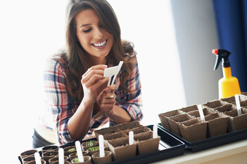 Fototapeta Mature woman planting seeds in greenhouse