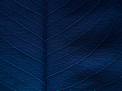 close up blue leaves texture