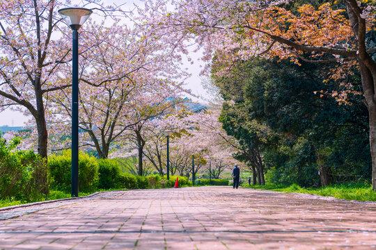北九州市民のオアシス, 春の福岡県が管理する中央公園