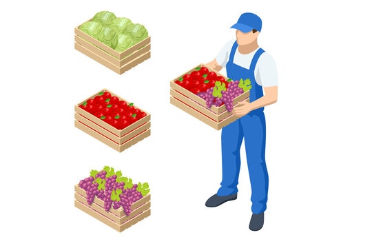 Isometric farmer holding a box with apples and grapes. Farmer with freshly harvested apples in wooden box. Agriculture and gardening concept