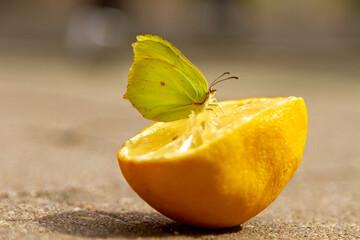 Fototapeta Zitronenfalter auf einer Zitrone - Frucht - brimstone