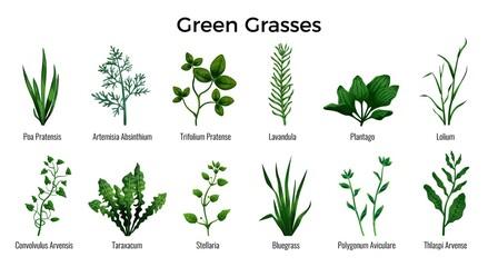 Green Grasses Set