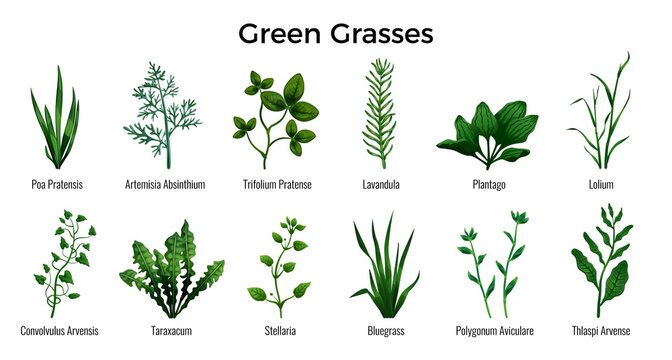 Green Grasses Set