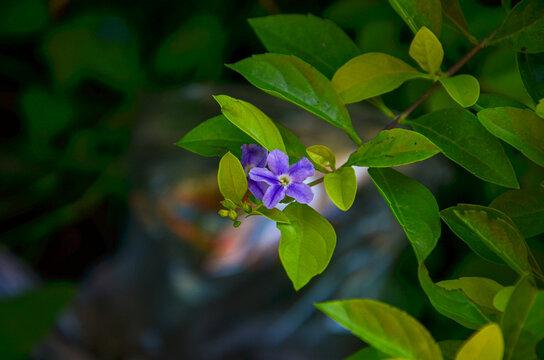 Beautiful light purple flower