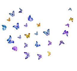 Fototapeta Flock of flying butterflies isolated on white