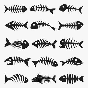 FISH BONE SKELETON VECTOR COLLECTION