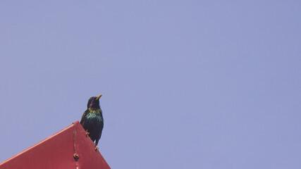 Fototapeta ptak na dachu