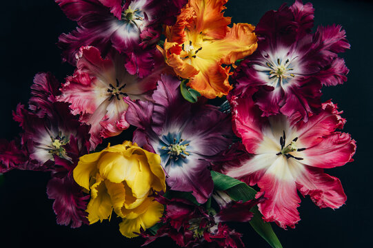 Bunch of Parrot Style Tulips