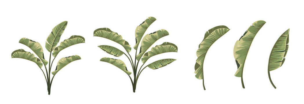 Set of differents banana leaves on white background.