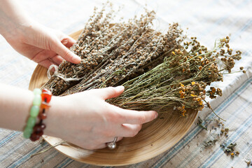 Fototapeta bunch of dried medicinal herbs in female hands, medicinal herbal collection.