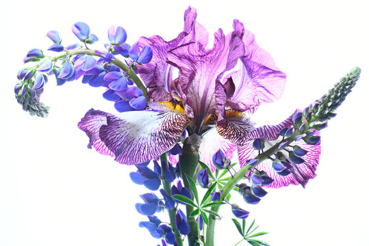 Bouquet with irises on a white background, isolated.