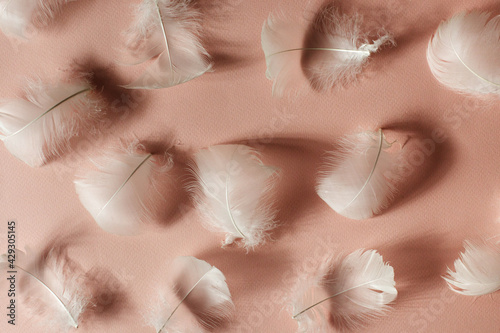 Beautiful airy gentle natural background with white swan feathers. Light pastel pink backdrop for women's day, valentines, mother's day, wedding or birthday. Minimal concept.