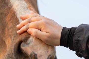 Fototapeta zbliżenie na dłoń głaszczącą konia