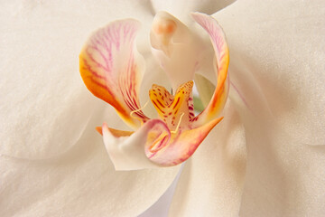 Closeup of a white orchid