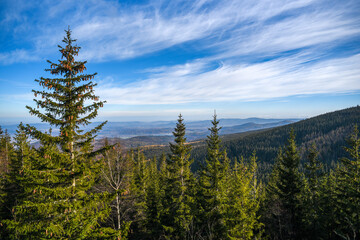 Fototapeta Mountain landscape with trees on mountain slopes. Selective focus.
