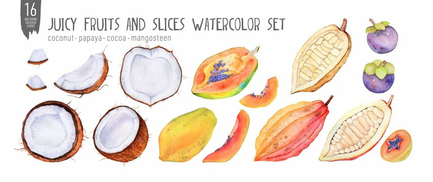 Fresh papaya, coconut and cocoa watercolor set, halves, slices, bites. Handdrawn tropical fruits. Isolation on white watercolor set.