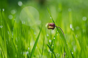 lakowy kwiat