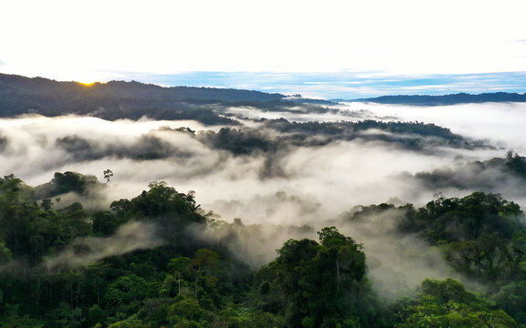 Sunrise in a tropical forest, early in the morning the dark rainforest canopy is still covered in a layer of fog or mist until the sun appears