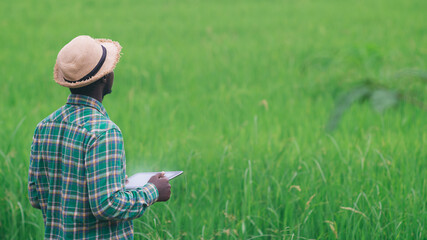 African farmer using tablet for research leaves of rice in organic farm field.Agriculture or cultivation concept