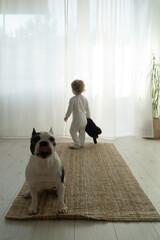 Obraz Buldog francuski i dziecko. Przyjaźń. Przyjaciel - fototapety do salonu