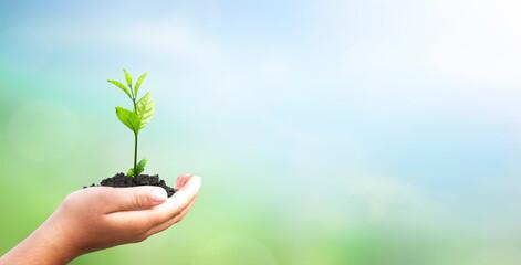 Fototapeta World environment day concept: hand holding tree over blurred natural background obraz