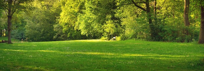 Wooden bench under the mighty deciduous trees on a green forest lawn. Den Haag central park, the Netherlands. Idyllic summer landscape, rural scene. Nature, ecotourism, environmental conservation