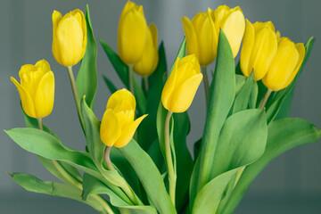 Fototapeta bukiet żółtych tulipanów