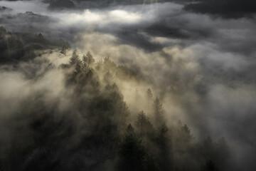 Luchtfoto prachtig uitzicht op de mistige en bewolkte bergen bedekt met bomen in het park