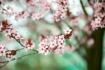 Obraz Wiosna! Kwitną drzewa - fototapety do salonu